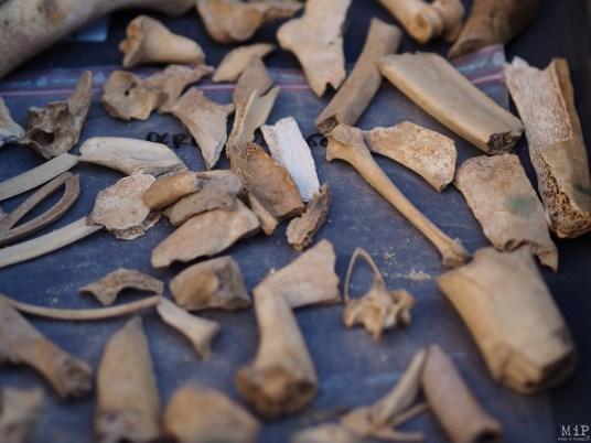 Campo Santo - Chantier de fouilles -2130128