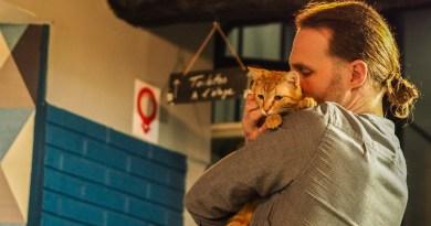Mars, le mois des Bars à chats à Perpignan