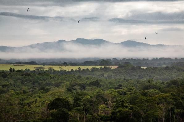 Sanctuaire de Conkouati au sud-ouest de Congo Brazzaville par Quentin Hulo - Diplômé de la section photojournalisme de Carcassonne - Prix Puressentielle Paris Match 2019