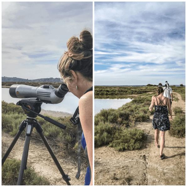 balade-ornithologique-parc-naturel-région-narbonnaise