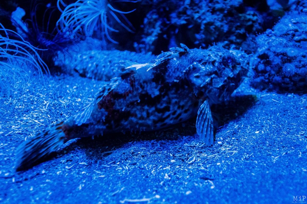 Biodiversarium Aquarium et Jardin méditerranéen Banyuls-sur-Mer Observatoire Océanologique Laboratoire pédagogique