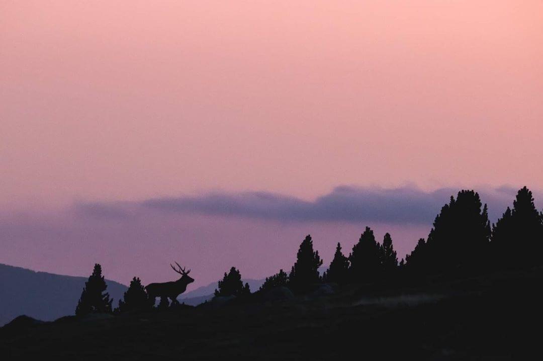 Cerdanyafotographia - Red deer (Cervus elaphus), cerf élaphe - Cerdanya, Pyrénées-Orientales Octobre 2019 - Collioure - Instagram