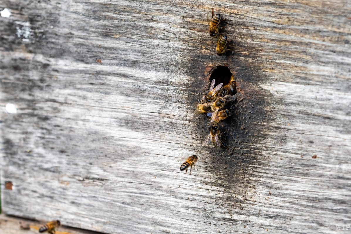 Illustrations biodiversité monde d'après abeille © Arnaud Le Vu / MiP / APM