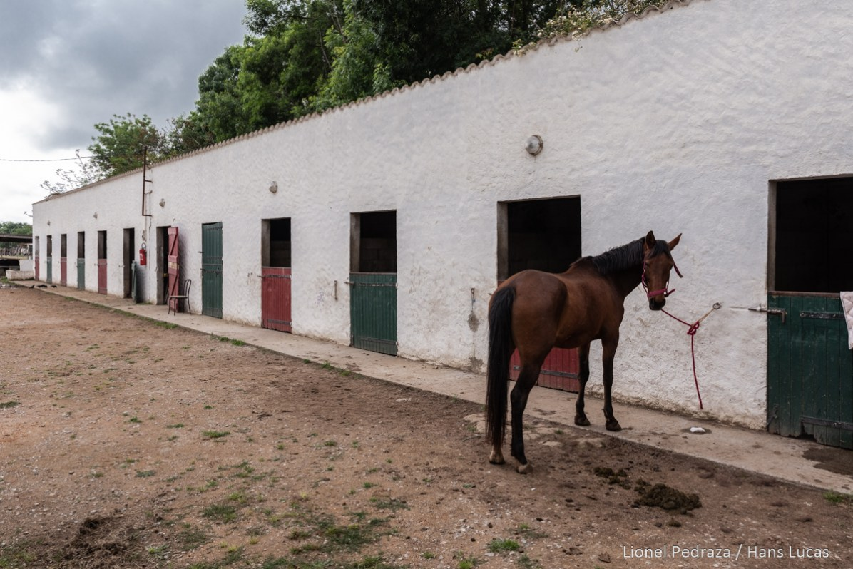 Villeneuve de la Raho, April 17, 2020, equestrian center. Close to the public since March 17, 2020 following the containment established during the COVID19 pandemic. a horse waits to be ridden by its rider. Villeneuve de la raho, 17 avril 2020, centre equestre. Fermer aux public depuis le 17 mars 2020 suite aux confinement instaure lors de la pandemie du COVID19. un cheval attend d etre monter par sa cavaliere.