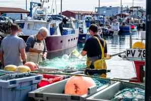 16/09/2017, Saint Cyprien, France, Illustrations pêche poisson pêcheur © Arnaud Le Vu / MiP / APM