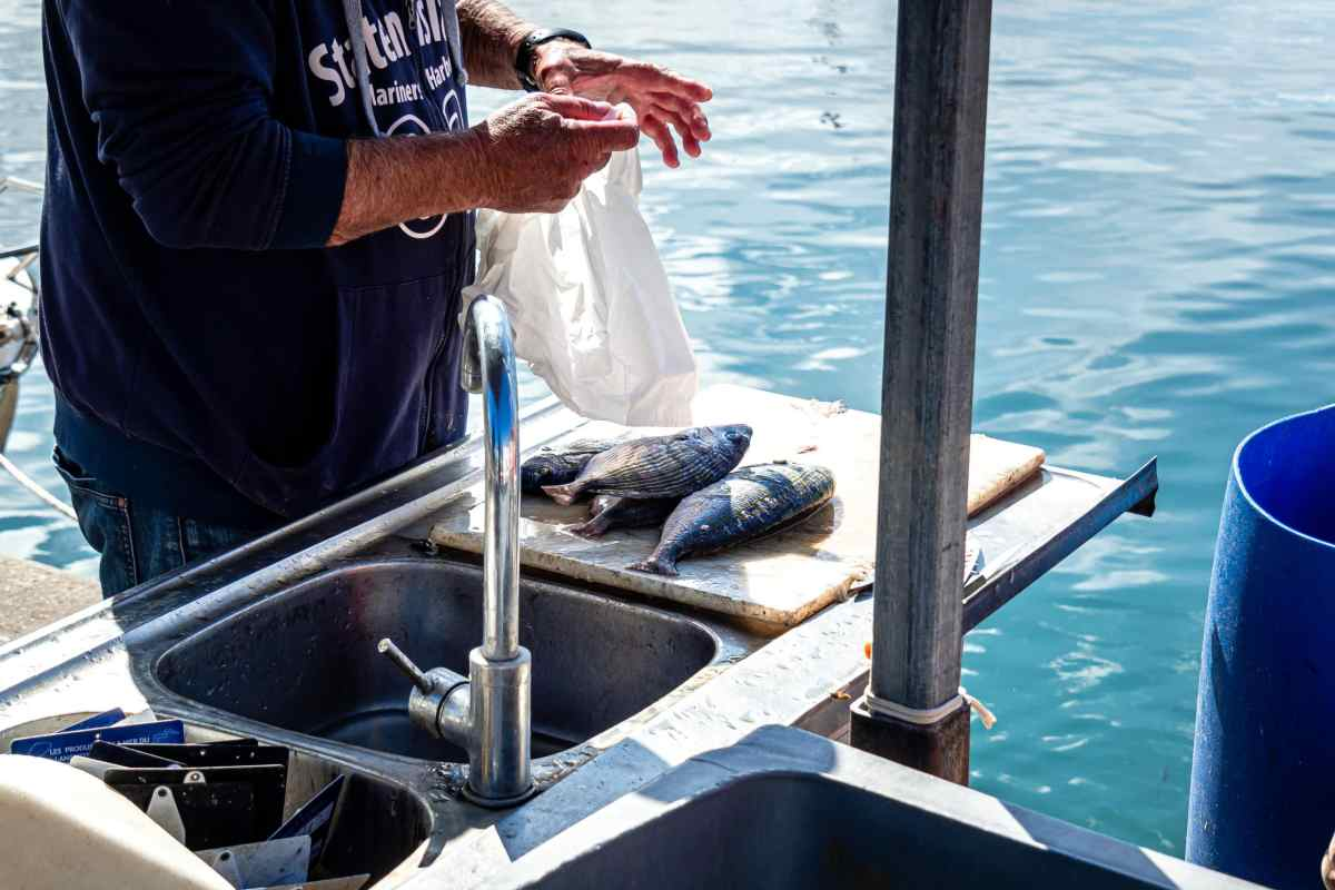 16/09/2017, Saint Cyprien, France, Illustrations pêche