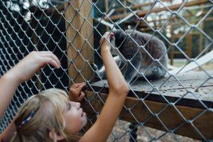 Vers la fin de l'élevage de visons, et des animaux sauvages dans les cirques ou delphinariums