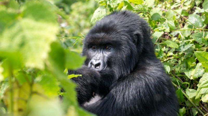 Lonely Planet rijkt 'Best in Travel'-award uit aan Rwanda