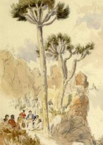4-dragon-trees-at-st-johns