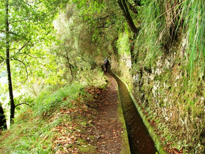 King's Levada Walk (Medicinal herbs) and Northeast views in Madeira (5)
