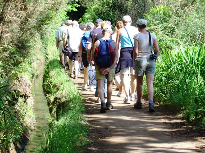 Paradise Valley Levada Walk in Madeira (2)