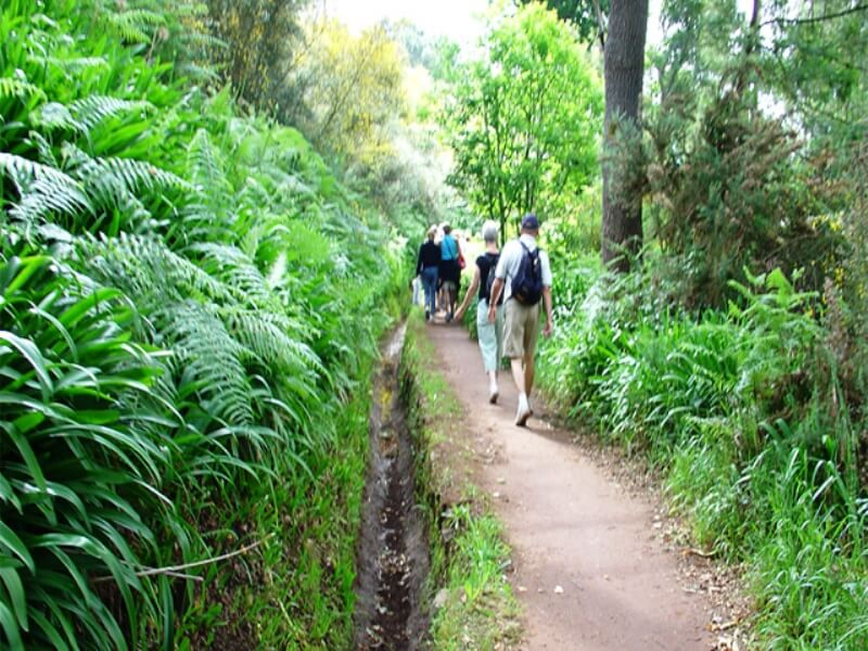 Paradise Valley Levada Walk in Madeira (7)