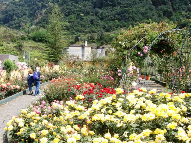 Rose Garden Tour Full Day Excursion in Madeira (5)