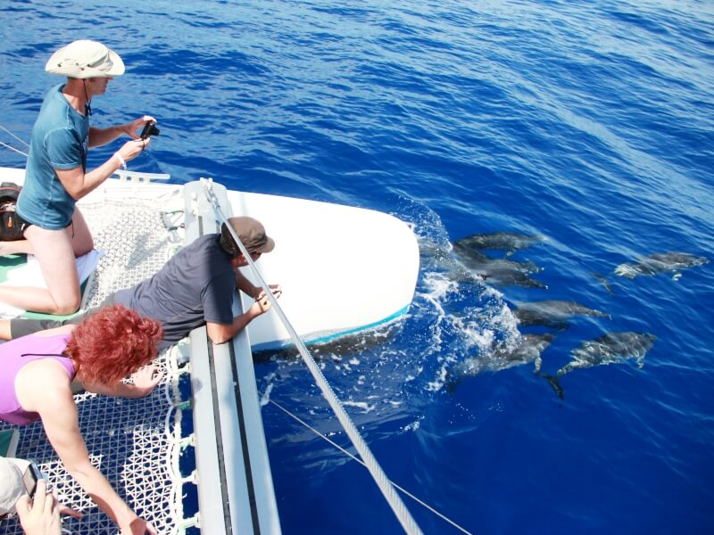 Dolphin & Whale Watching Boat Trips