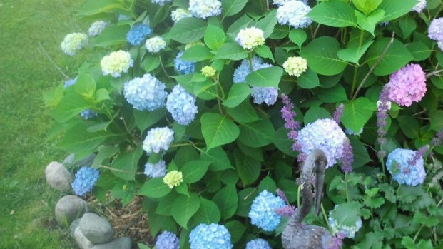 prayer-examen-garden