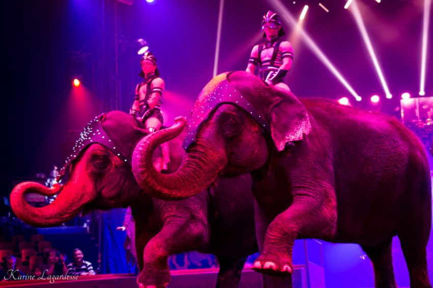 Cirque Arlette Gruss - Blog Made me happy - bordeaux-18