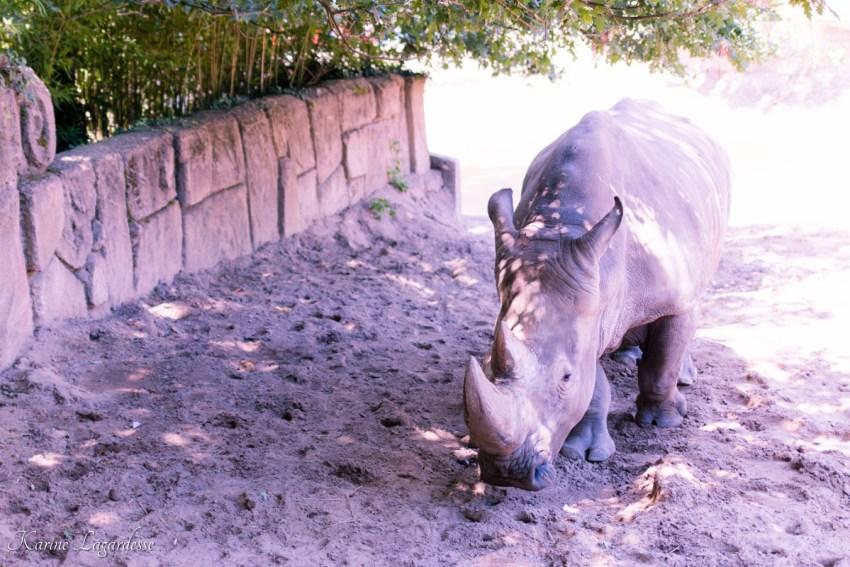 zoo-palmyre-made-me-happy-blog-bordeaux-34