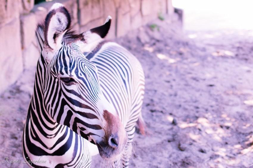zoo-palmyre-made-me-happy-blog-bordeaux-35