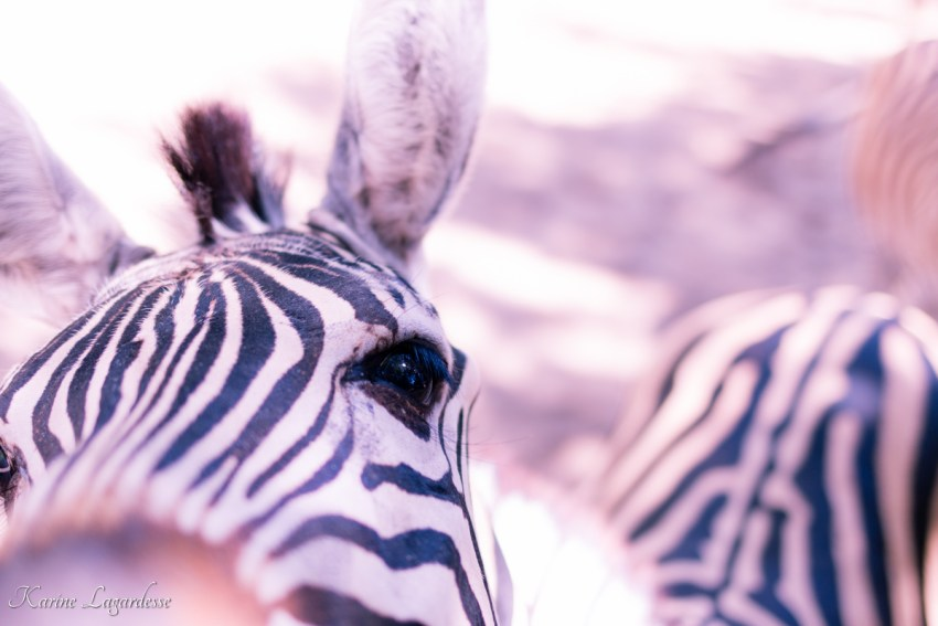 zoo-palmyre-made-me-happy-blog-bordeaux-48
