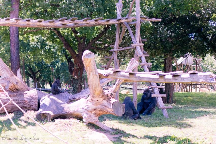zoo-palmyre-made-me-happy-blog-bordeaux-49
