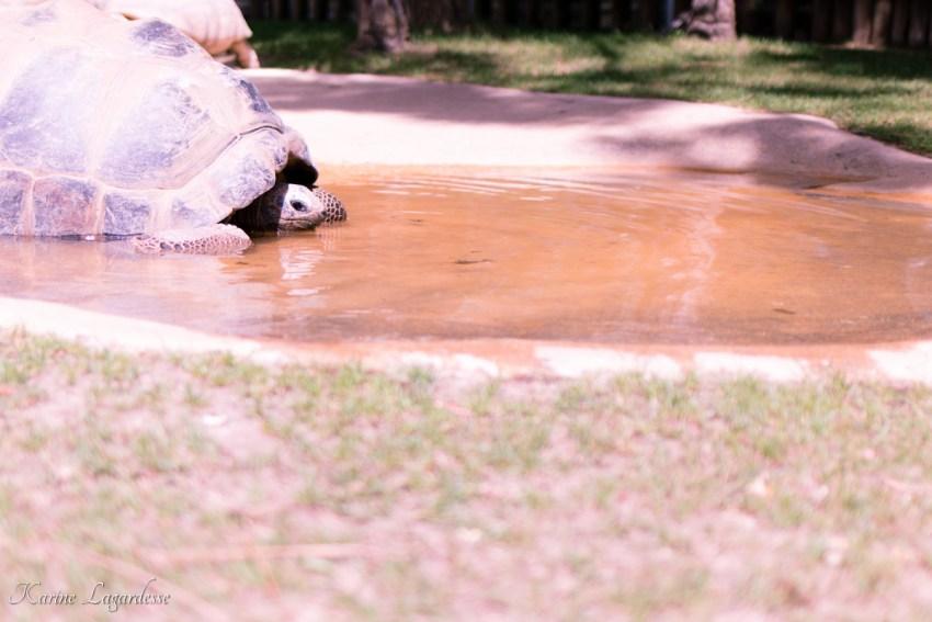zoo-palmyre-made-me-happy-blog-bordeaux-59