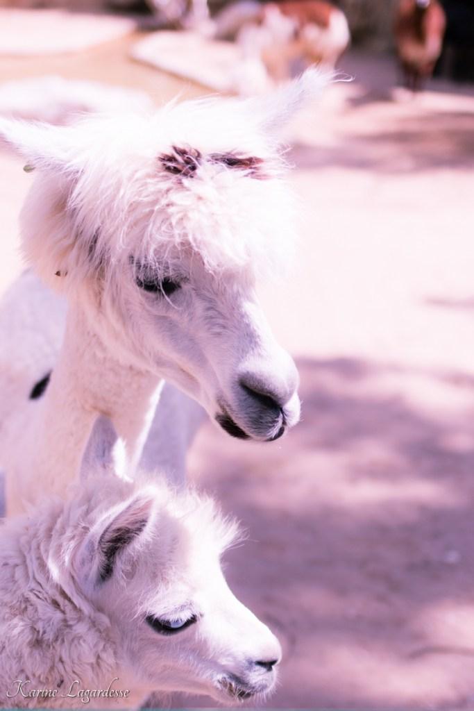 zoo-palmyre-made-me-happy-blog-bordeaux-61