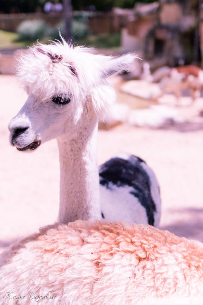 zoo-palmyre-made-me-happy-blog-bordeaux-62