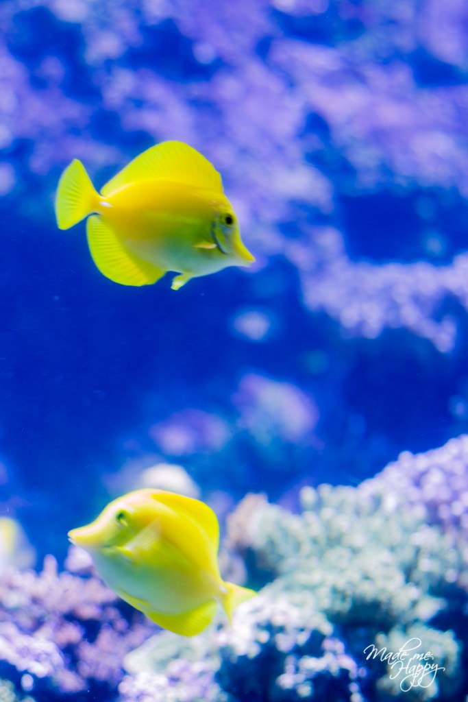Aquarium La Rochelle - Blog lifestyle Bordeaux