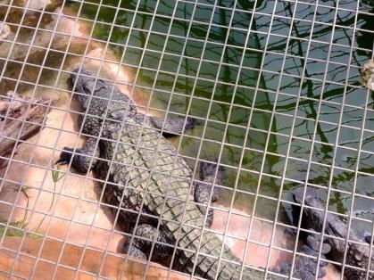 ferme aux crocodiles 09
