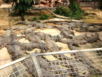 ferme aux crocodiles 10