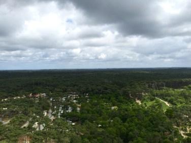 Côté forêt