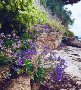 Isole bretoni: ÎLE D'ARZ