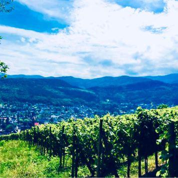 Strada dei vini Alsazia: Guebwiller