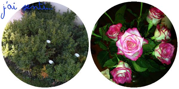 Semaine en cinq sens - odorat