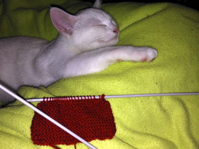 chat et tricot