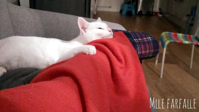 chat blanc qui fait un câlin