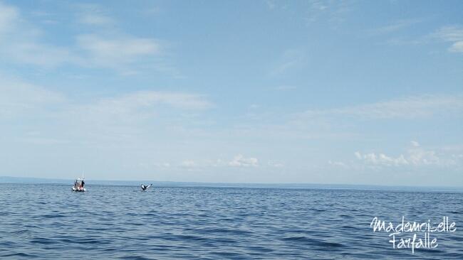 baleines fjord du saguenay