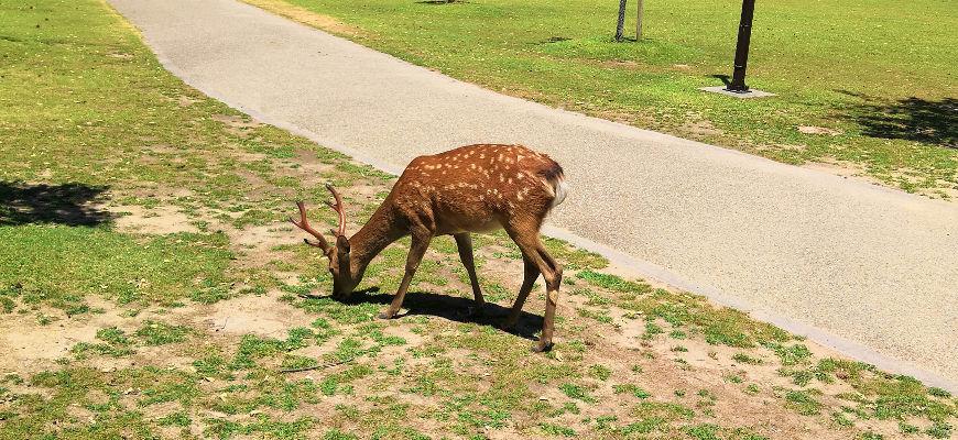 Carnet de voyage au Japon #9 – Nara, la ville aux cerfs