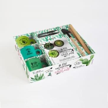 kit cactus cadeau