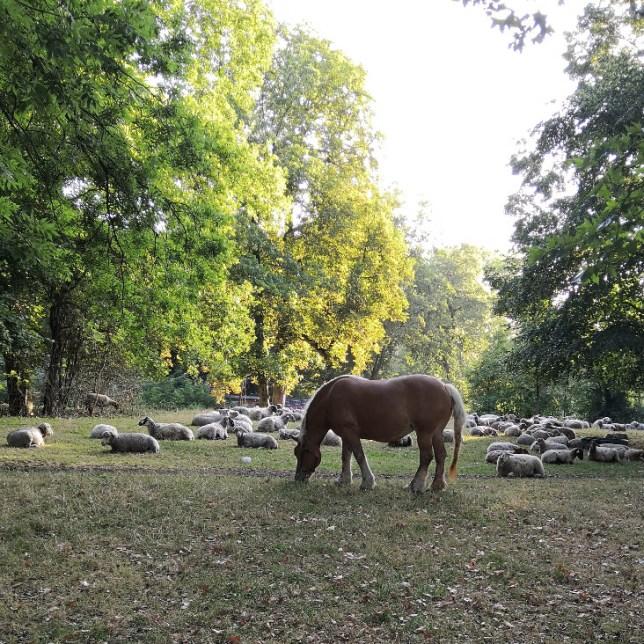 Cheval au Bois de Boulogne