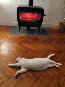 chat étalé