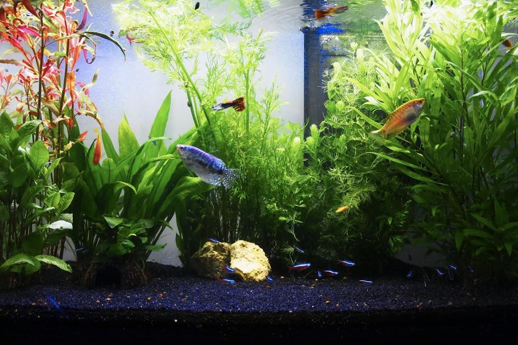 Installer son aquarium avec Botanic