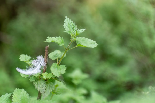 White feather among plants
