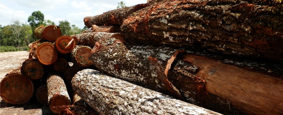Jornadas para el sector de la madera de AEIM