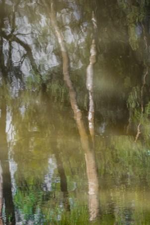 Murray_River_Blog-10