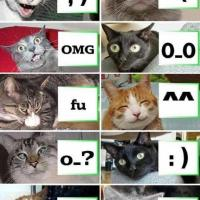 Funny cat picture - cat faces!