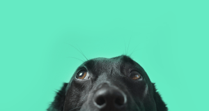 Best in Show: Why a Good Dog Makes a Great Commercial