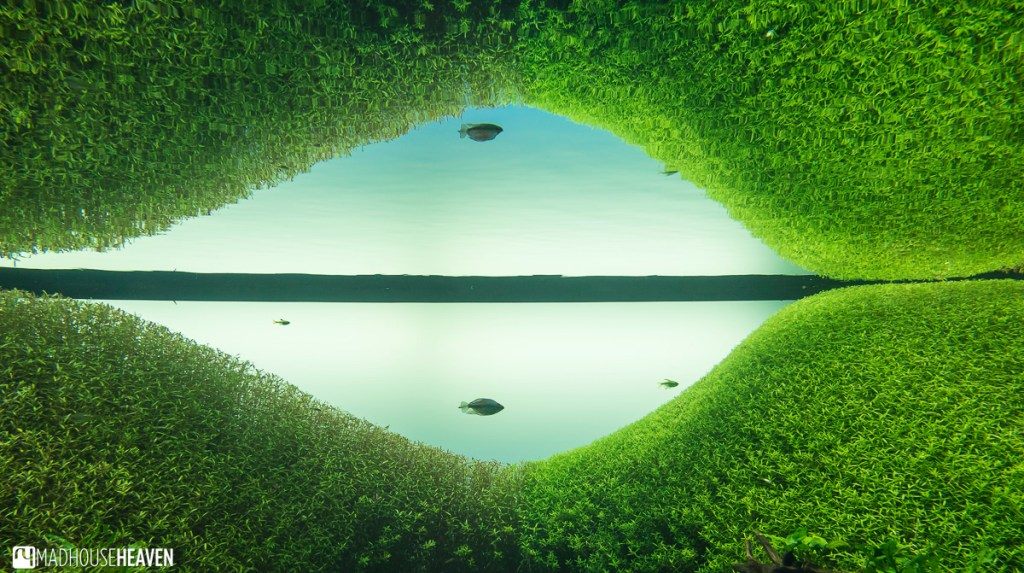 Grass growing underwater and in the sky in Forest Underwater, an exhibition at the Lisbon Oceanarium by Takeshi Amano