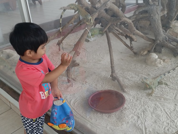Enjoying the iguanas, Nirwana resort,Bintan.jpg
