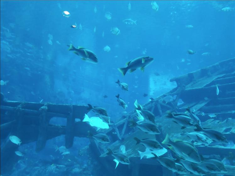 3.1 Sea Aquarium .png